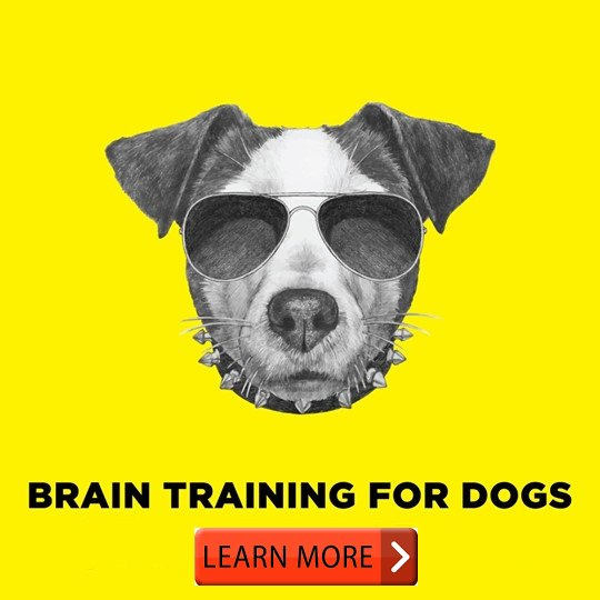 Brain Train Your Dog